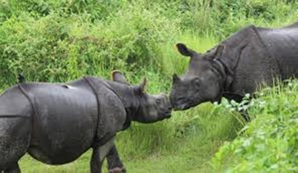 Pride of Chitwan National Park - One horn Rhinos