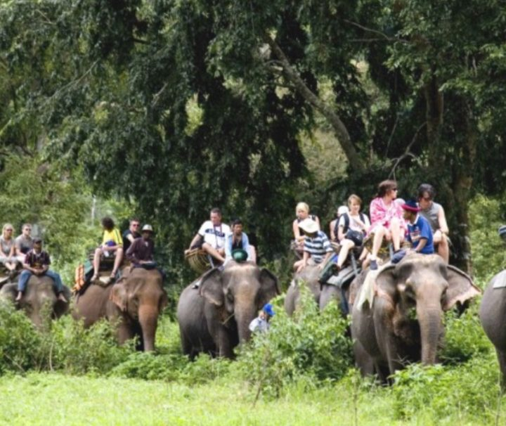 Chitwan Jeep Safari Tour safari Tour