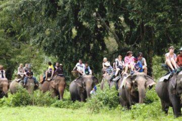 Chitwan Jeep Safari Tour safari Tour